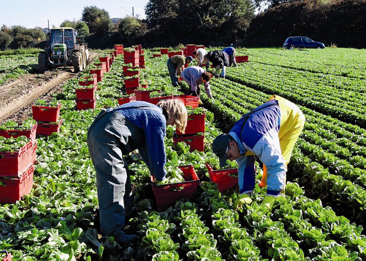 Заробитчане жалуются на условия работы в сытой Европе